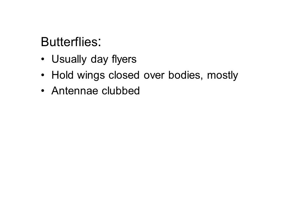 Butterflies : Usually day flyers Hold wings closed over bodies, mostly Antennae clubbed
