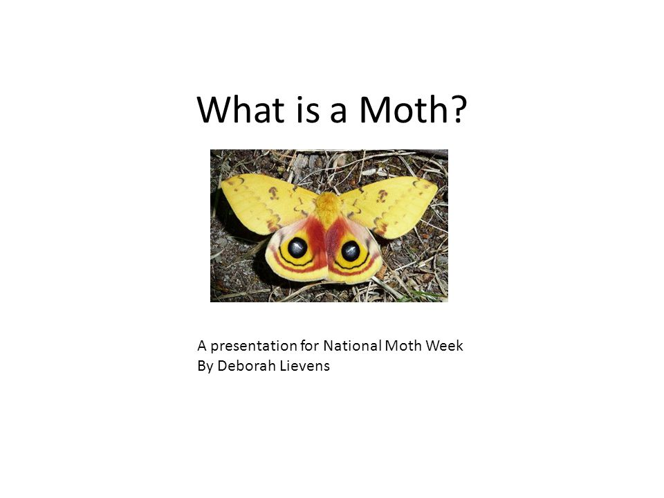 What is a Moth? A presentation for National Moth Week By Deborah Lievens