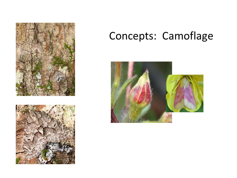 Concepts: Camoflage