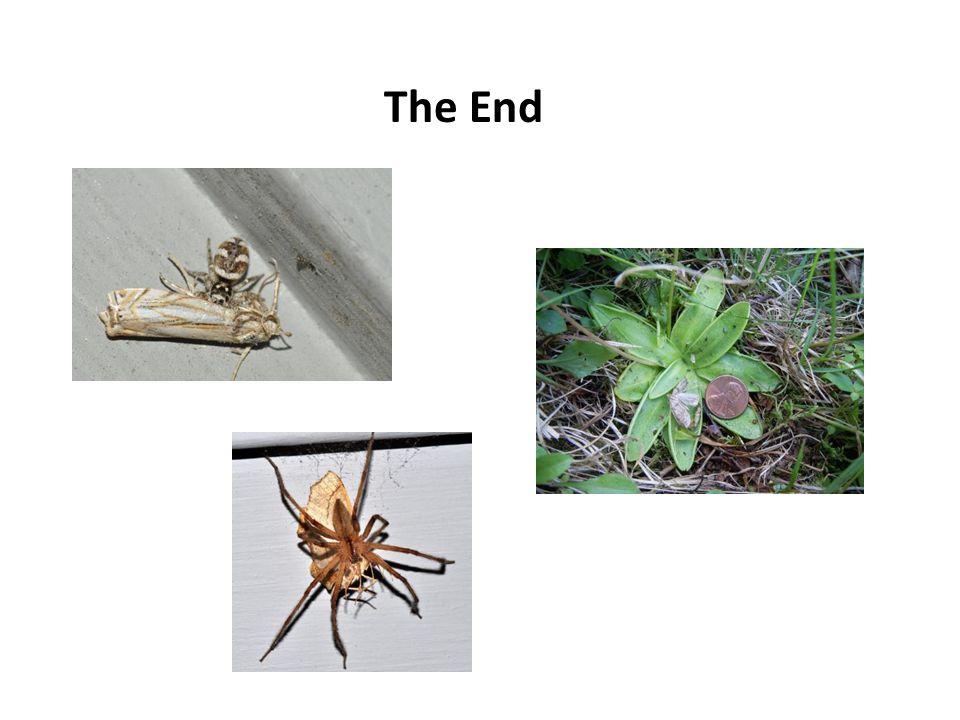 WWW.NATIONALMOTHWEEK.ORG Facebook: National Moth Week National Moth Week Caterpillars Twitter: @Moth_Week Email: info@nationalmothweek.org