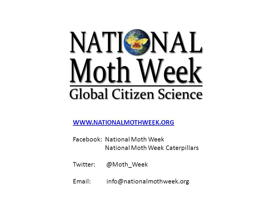 WWW.NATIONALMOTHWEEK.ORG Facebook: National Moth Week National Moth Week Caterpillars Twitter: @Moth_Week Email: info@nationalmothweek.org
