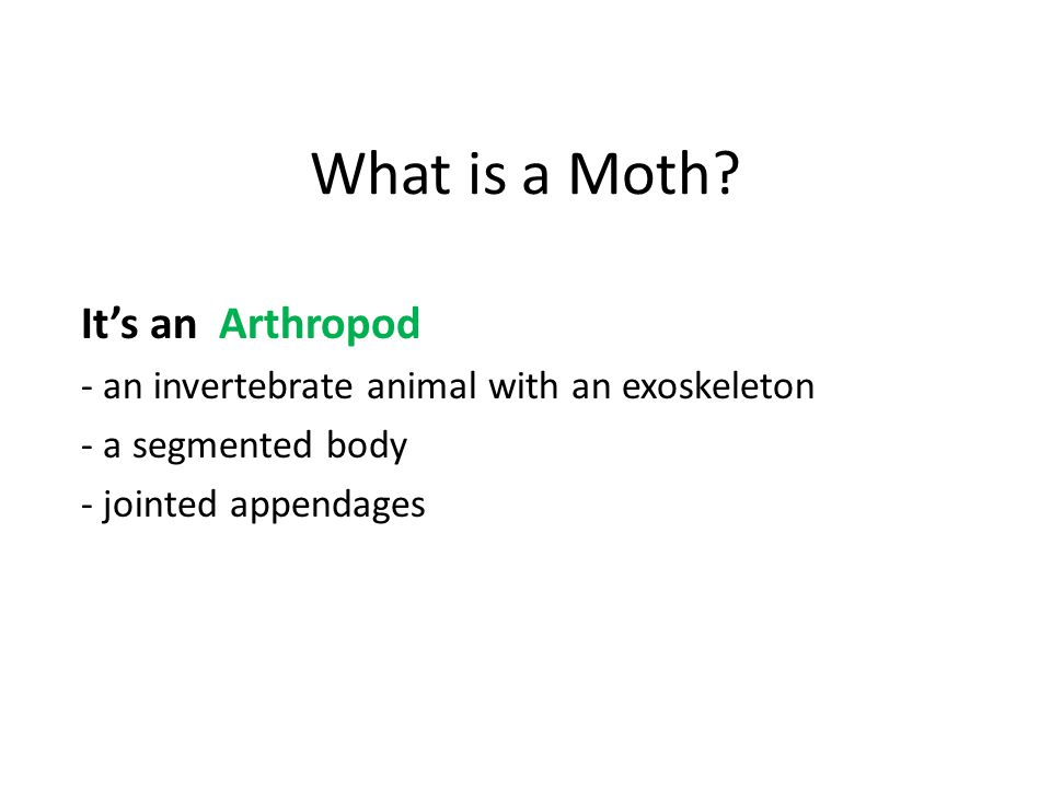 What is a Moth.