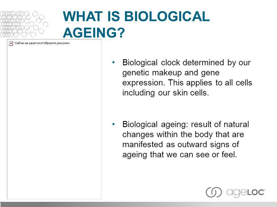 Biological clock determined by our genetic makeup and gene expression. This applies to all cells including our skin cells. Biological ageing: result o