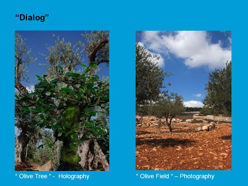 Olive Tree - Holography Olive Field – Photography Dialog