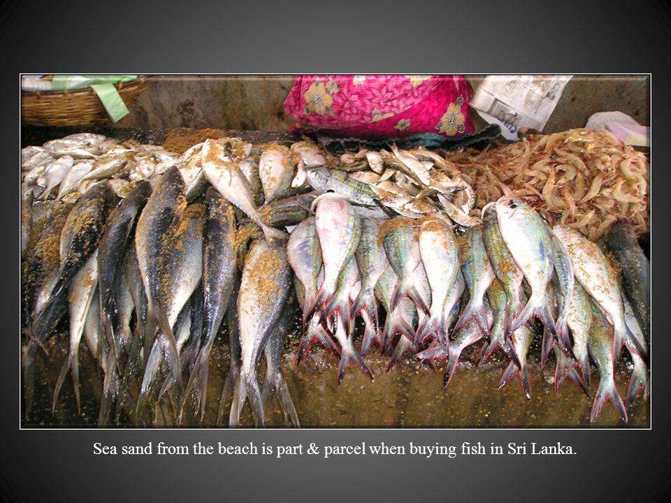 A fresh fish stall. ( Malu Kade )