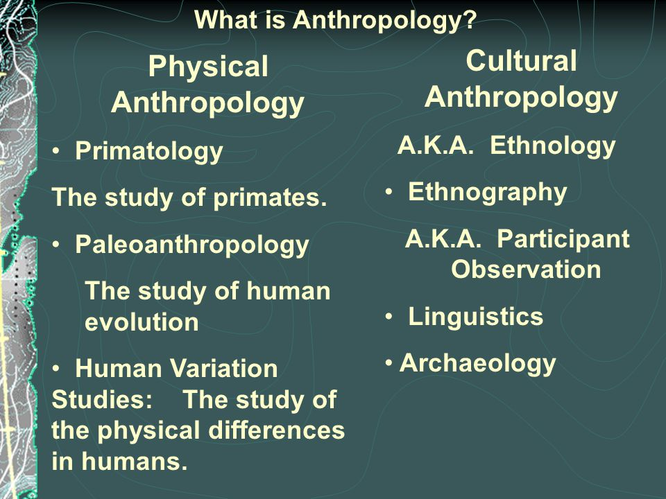 What is Anthropology. Physical Anthropology Primatology The study of primates.