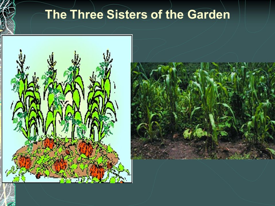 The Three Sisters of the Garden