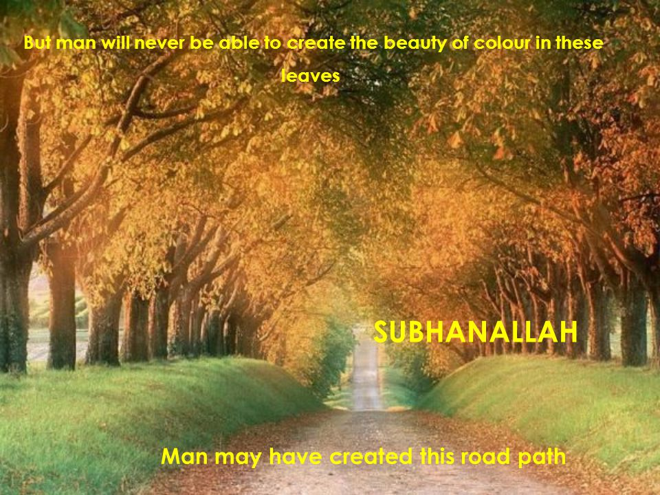 But man will never be able to create the beauty of colour in these leaves Man may have created this road path SUBHANALLAH
