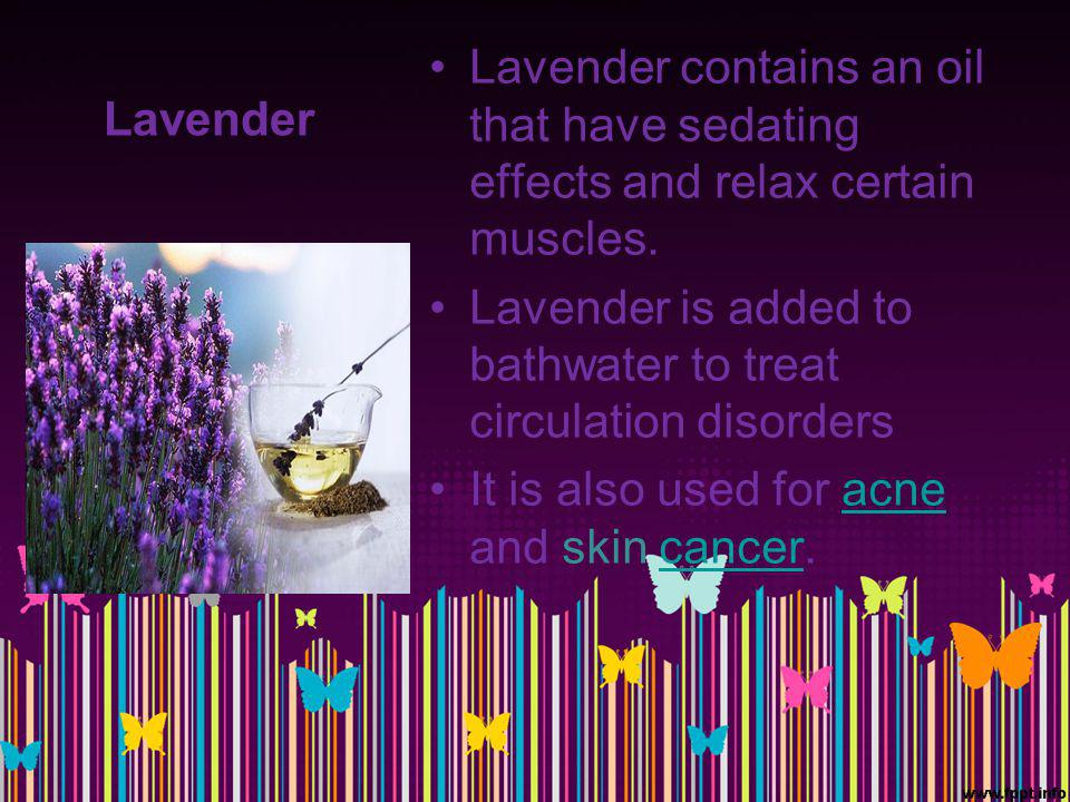 Lavender Lavender contains an oil that have sedating effects and relax certain muscles. Lavender is added to bathwater to treat circulation disorders