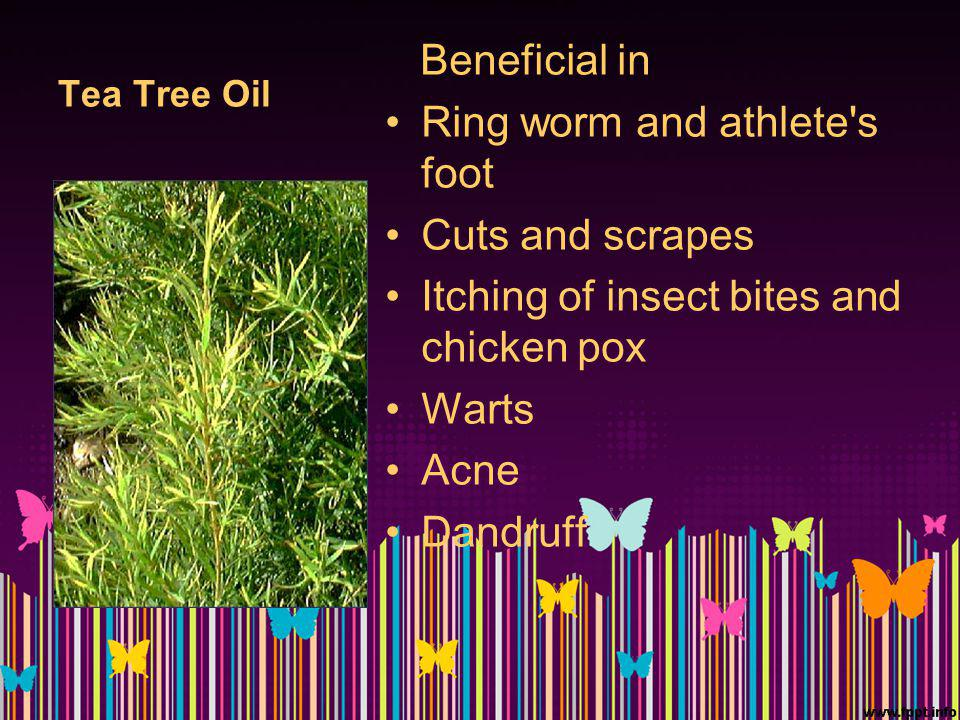 Tea Tree Oil Beneficial in Ring worm and athlete's foot Cuts and scrapes Itching of insect bites and chicken pox Warts Acne Dandruff