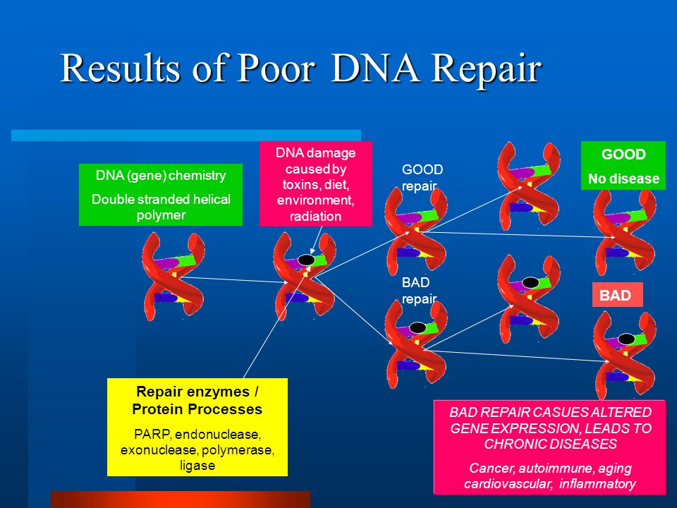 Results of Poor DNA Repair DNA (gene) chemistry Double stranded helical polymer DNA damage caused by toxins, diet, environment, radiation Repair enzymes / Protein Processes PARP, endonuclease, exonuclease, polymerase, ligase GOOD repair BAD repair GOOD No disease BAD BAD REPAIR CASUES ALTERED GENE EXPRESSION, LEADS TO CHRONIC DISEASES Cancer, autoimmune, aging cardiovascular, inflammatory