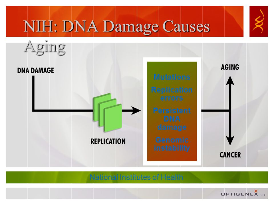 NIH: DNA Damage Causes Aging Mutations Replication errors Persistent DNA damage Genomic instability National Institutes of Health