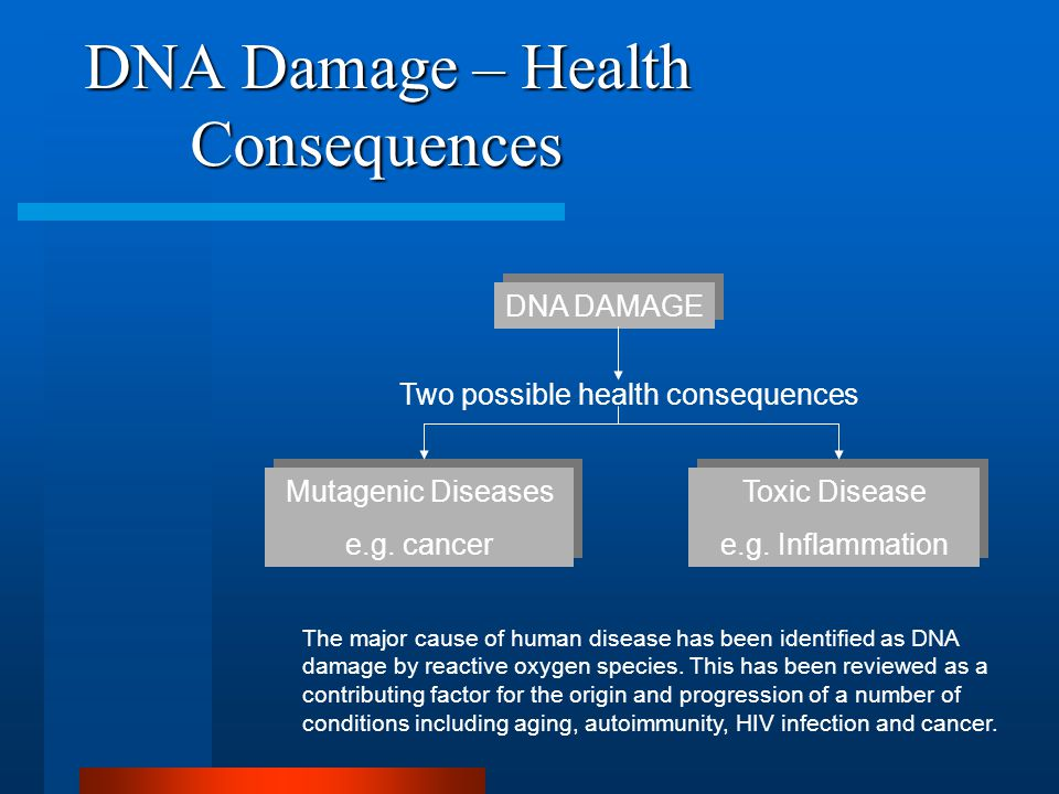 DNA Damage – Health Consequences DNA DAMAGE Mutagenic Diseases e.g.
