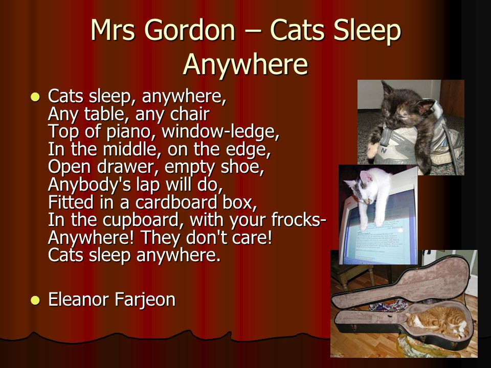 Mrs Gordon – Cats Sleep Anywhere Cats sleep, anywhere, Any table, any chair Top of piano, window-ledge, In the middle, on the edge, Open drawer, empty shoe, Anybody s lap will do, Fitted in a cardboard box, In the cupboard, with your frocks- Anywhere.