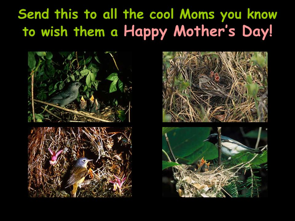 Send this to all the cool Moms you know to wish them a Happy Mothers Day!