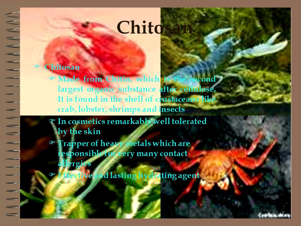 Chitosan Made from Chitin, which is the second largest organic substance after cellulose.