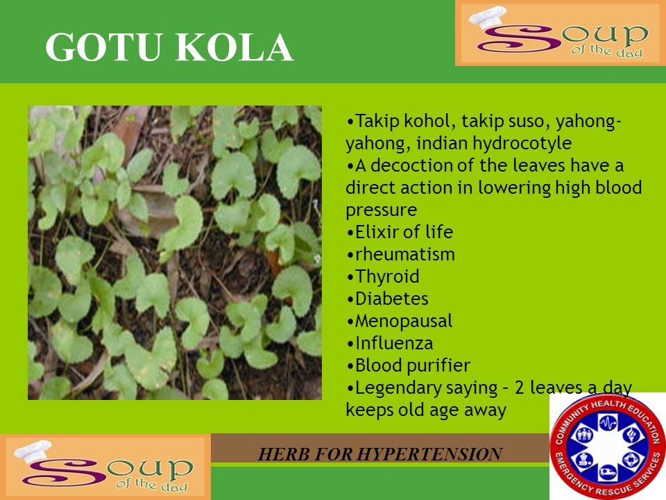 GOTU KOLA HERB FOR HYPERTENSION Takip kohol, takip suso, yahong- yahong, indian hydrocotyle A decoction of the leaves have a direct action in lowering