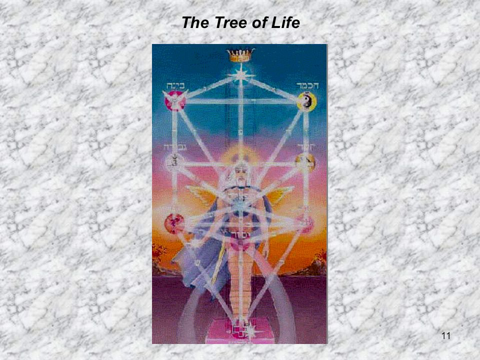 11 The Tree of Life