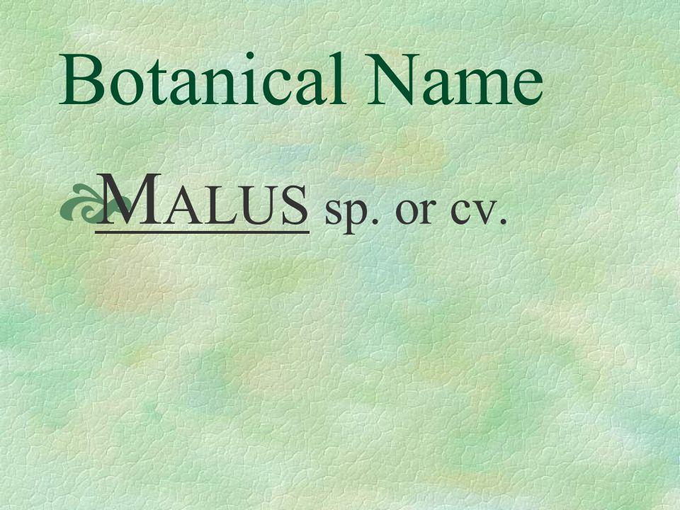Botanical Name M ALUS sp. or cv.