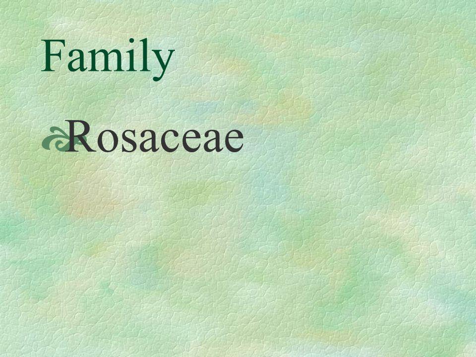 Family Rosaceae