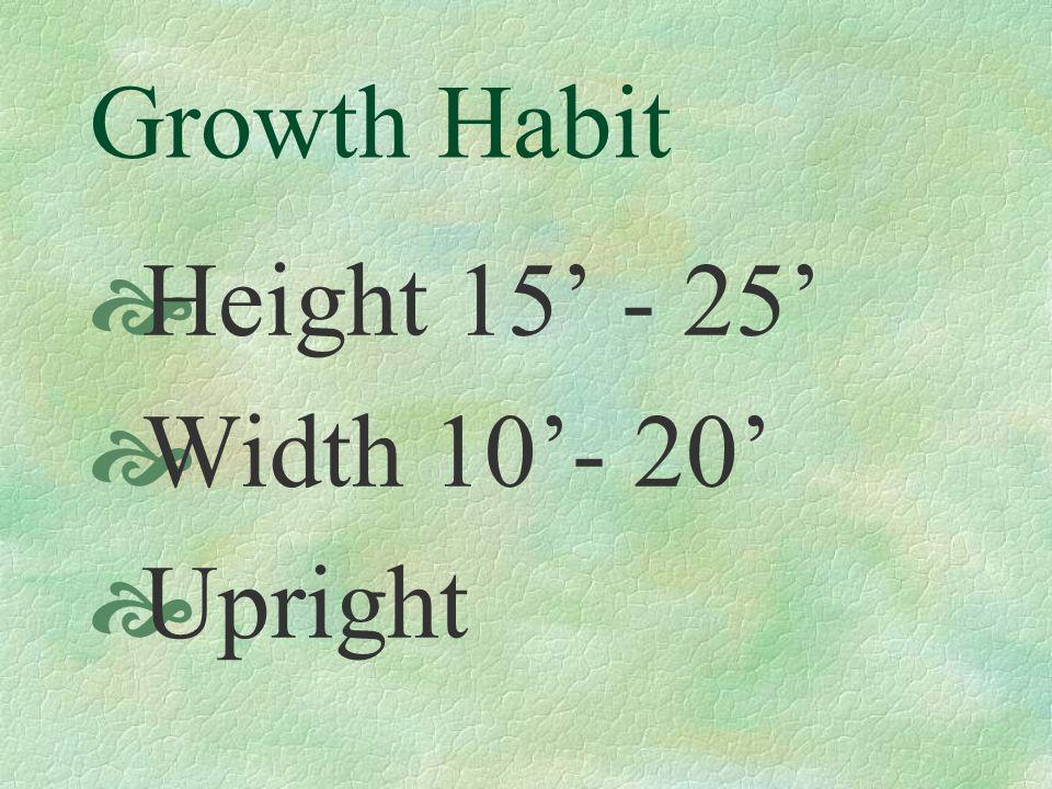Growth Habit Height 15 - 25 Width 10- 20 Upright