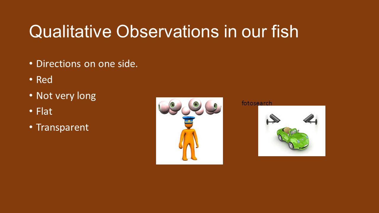 Qualitative Observations in our fish Directions on one side.