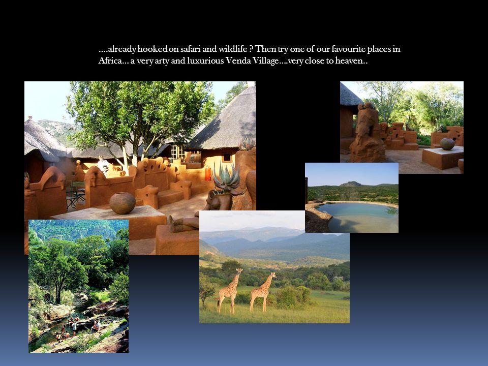 ….already hooked on safari and wildlife .