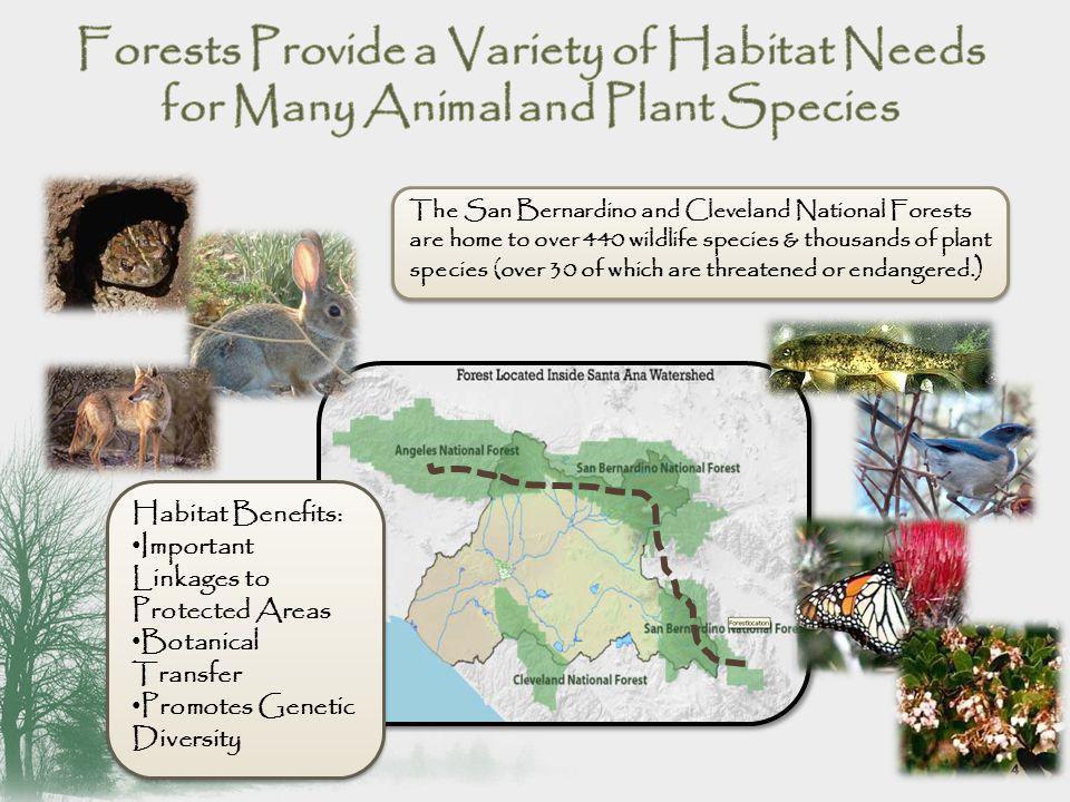 ClimatePlant Communities Animal Communities Insect and Fungal Communities Aquatic Communities Soil Properties Precipitation Elevation Birds Mammals Reptiles Food Chain