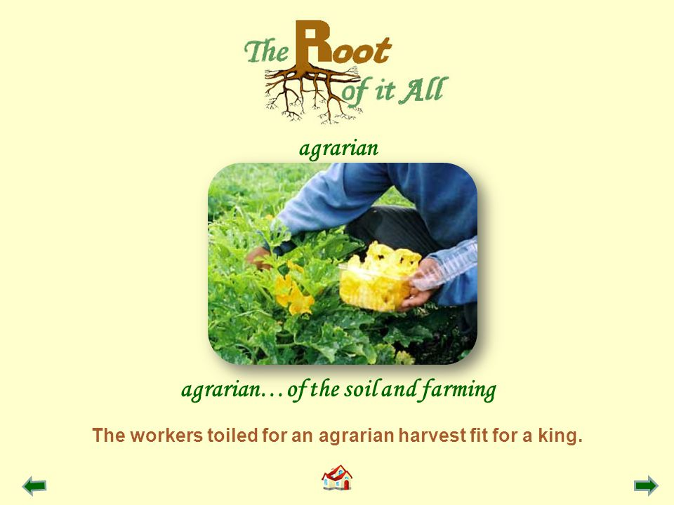 The workers toiled for an agrarian harvest fit for a king.