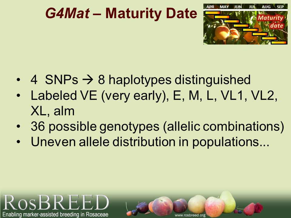G4Mat – Maturity Date APRMAYJUNJULAUGSEP 4 SNPs 8 haplotypes distinguished Labeled VE (very early), E, M, L, VL1, VL2, XL, alm 36 possible genotypes (allelic combinations) Uneven allele distribution in populations...