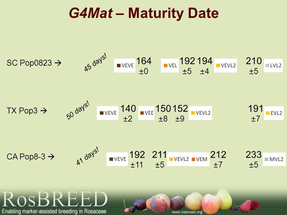 G4Mat – Maturity Date SC Pop0823 164 ±0 192 ±5 194 ±4 210 ±5 45 days! TX Pop3 140 ±2 150 ±8 152 ±9 191 ±7 50 days! CA Pop8-3 192 ±11 211 ±5 212 ±7 233