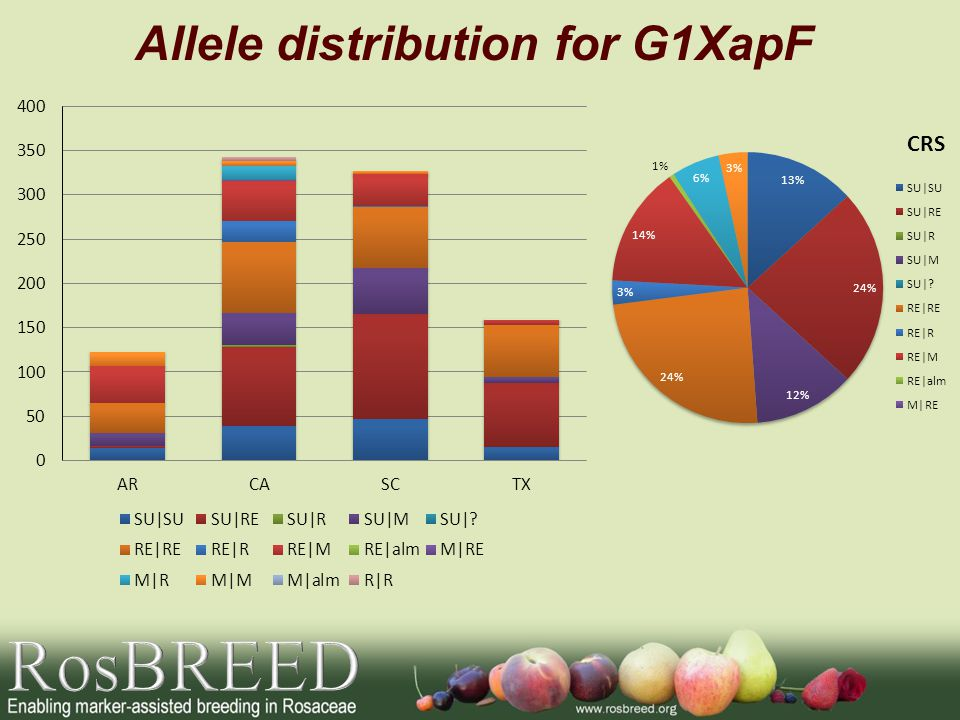 Allele distribution for G1XapF