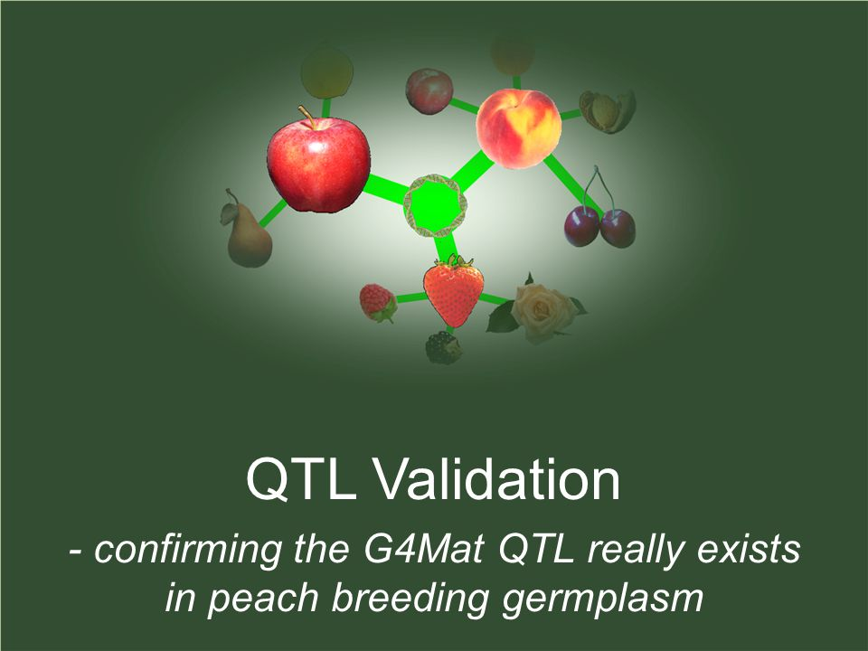 QTL Validation - confirming the G4Mat QTL really exists in peach breeding germplasm