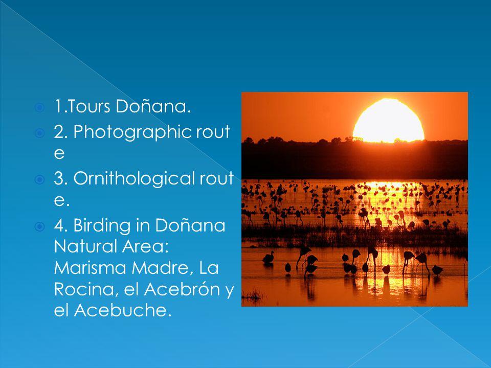 1.Tours Doñana.2. Photographic rout e 3. Ornithological rout e.