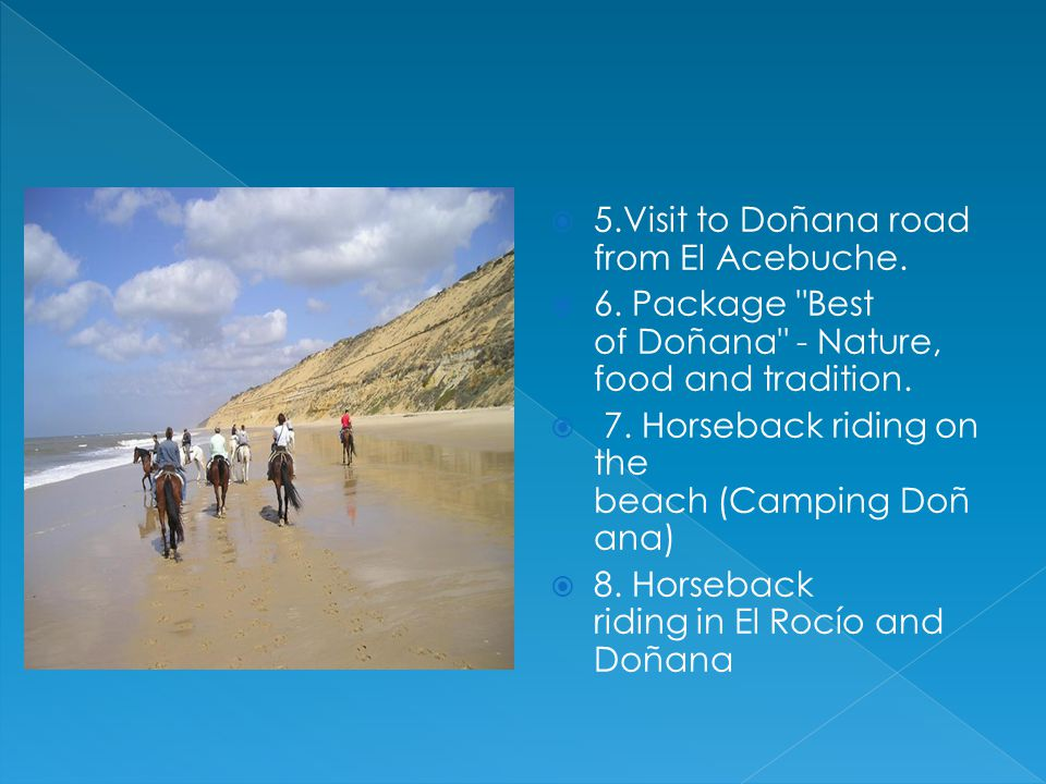 5.Visit to Doñana road from El Acebuche.6. Package Best of Doñana - Nature, food and tradition.