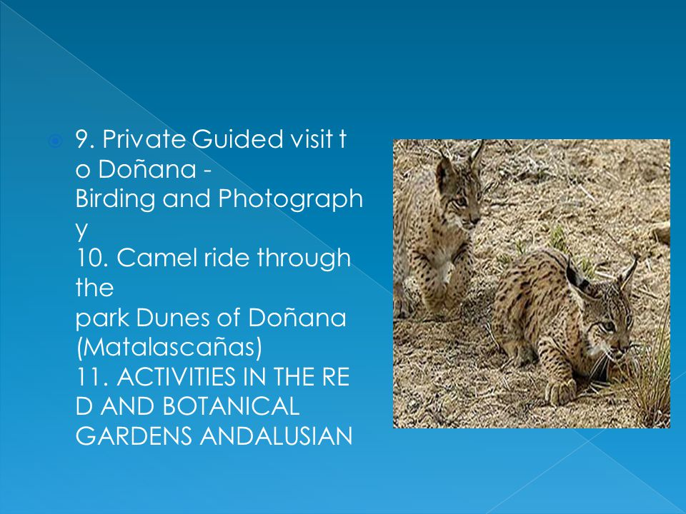5.Visit to Doñana road from El Acebuche. 6. Package Best of Doñana - Nature, food and tradition.