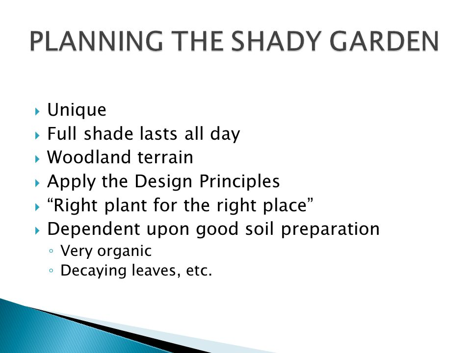 Unique Full shade lasts all day Woodland terrain Apply the Design Principles Right plant for the right place Dependent upon good soil preparation Very organic Decaying leaves, etc.