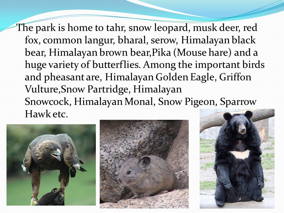 The park is home to tahr, snow leopard, musk deer, red fox, common langur, bharal, serow, Himalayan black bear, Himalayan brown bear,Pika (Mouse hare) and a huge variety of butterflies.