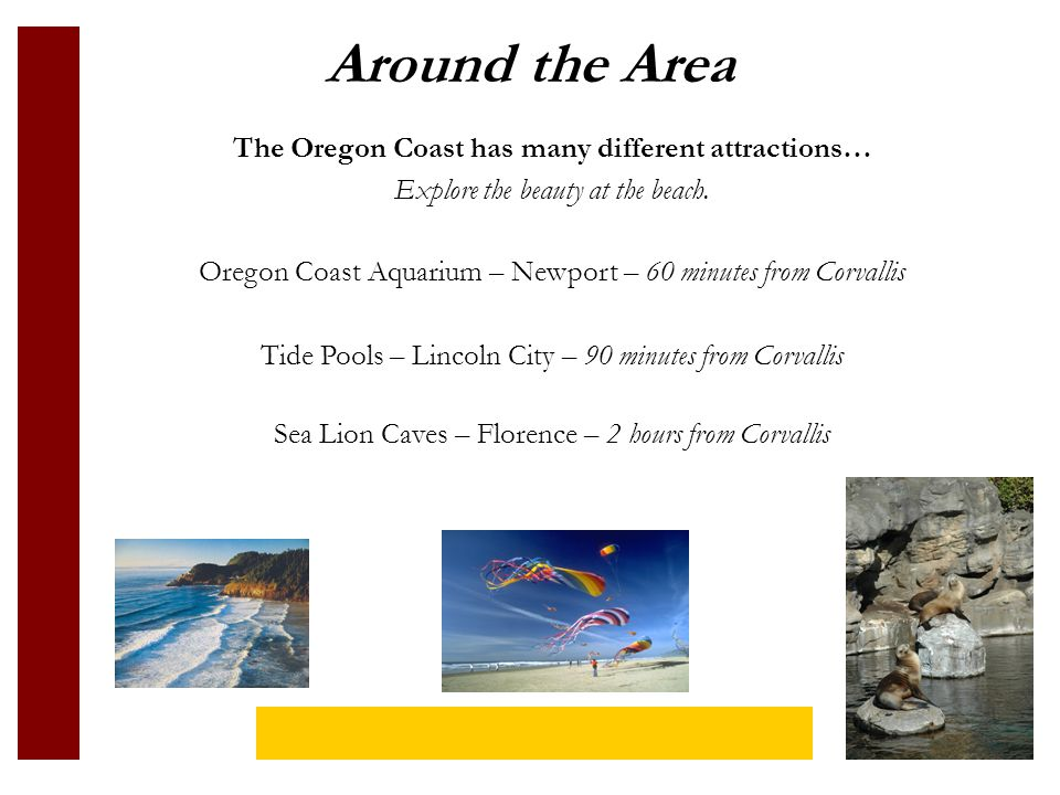 Around the Area The Oregon Coast has many different attractions… Explore the beauty at the beach.