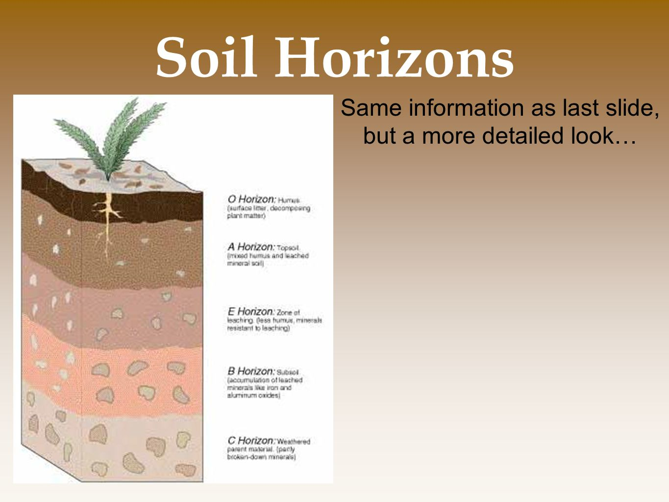 Soil Horizons Same information as last slide, but a more detailed look…