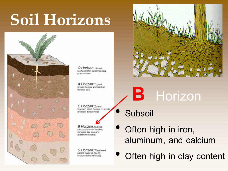 Soil Horizons B Horizon Subsoil Often high in iron, aluminum, and calcium Often high in clay content