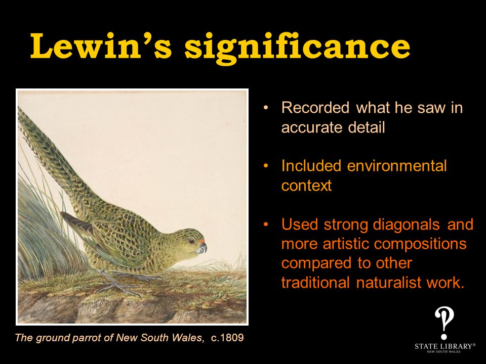 Lewins significance Recorded what he saw in accurate detail Included environmental context Used strong diagonals and more artistic compositions compared to other traditional naturalist work.