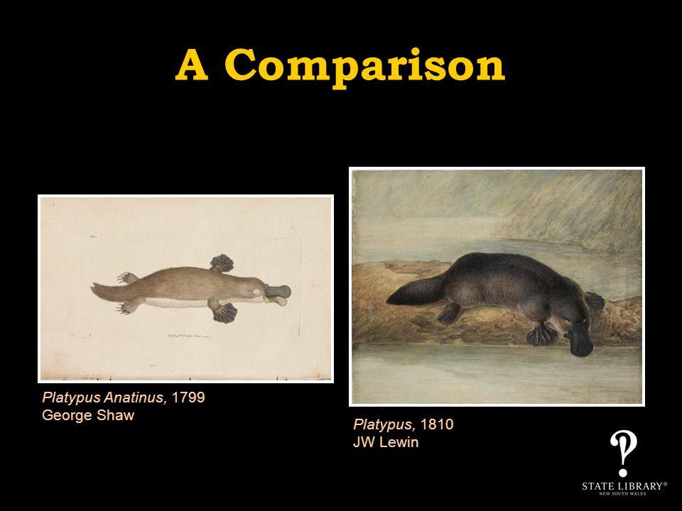A Comparison Platypus Anatinus, 1799 George Shaw Platypus, 1810 JW Lewin