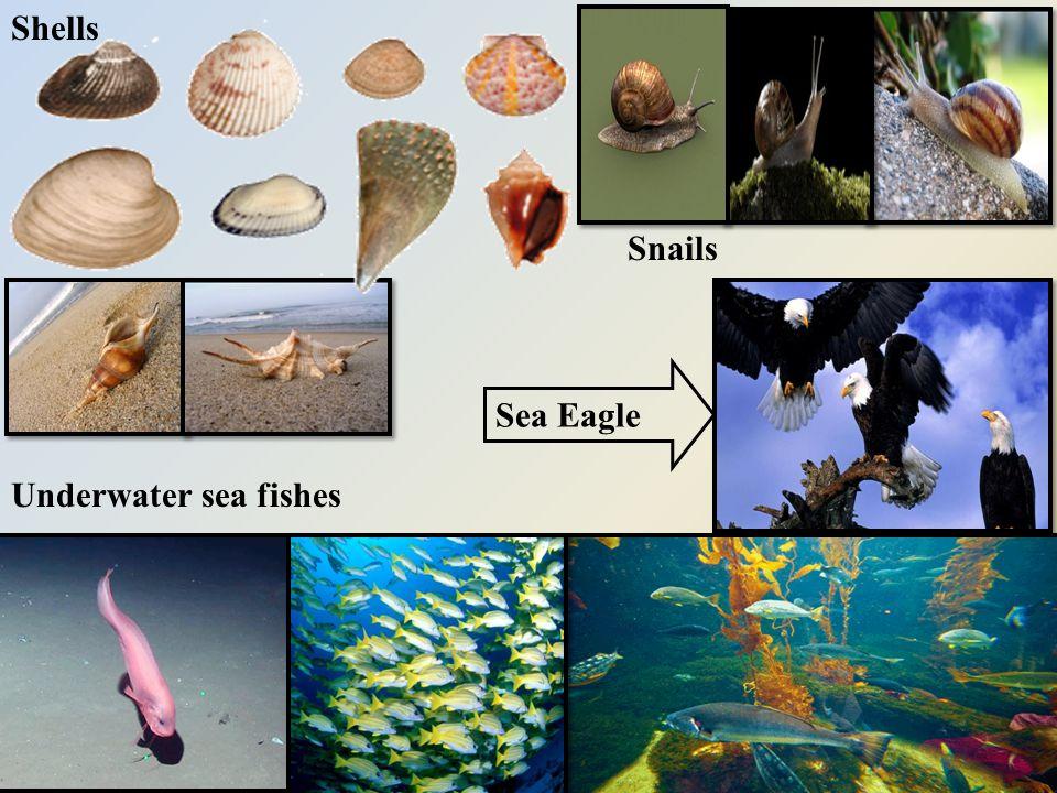 Shells Snails Underwater sea fishes Sea Eagle