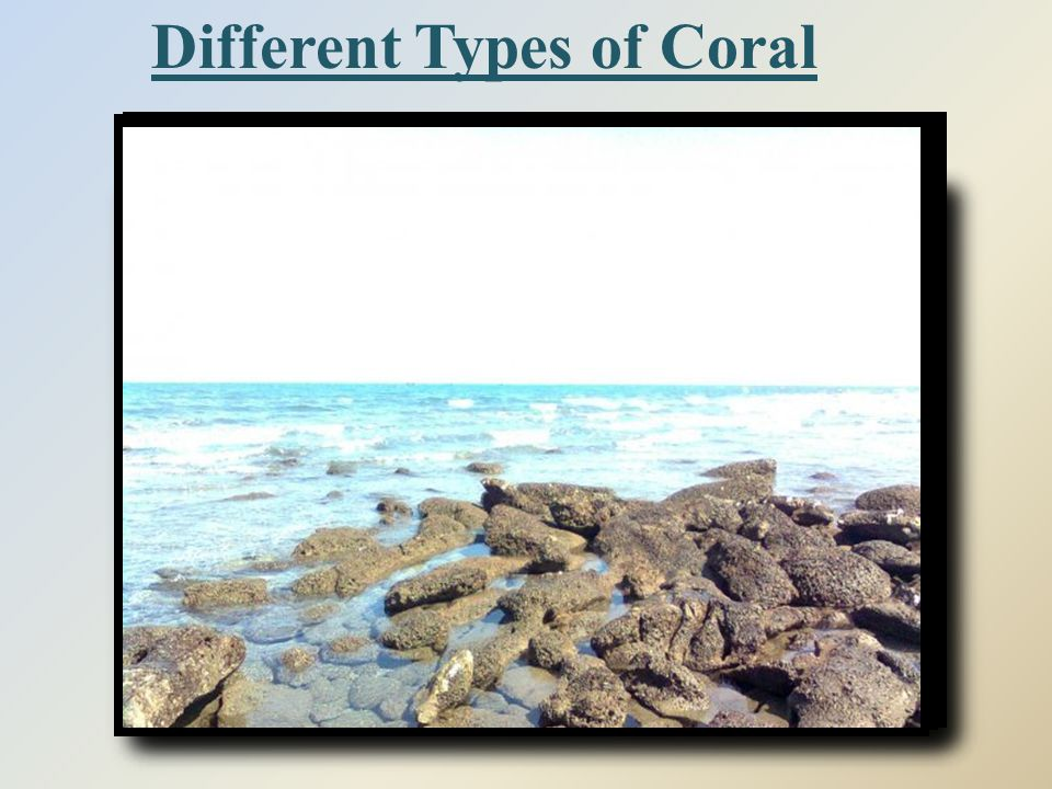 Different Types of Coral