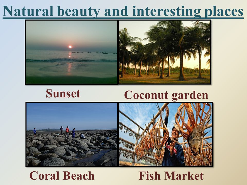 Natural beauty and interesting places Sunset Coconut garden Fish Market Coral Beach