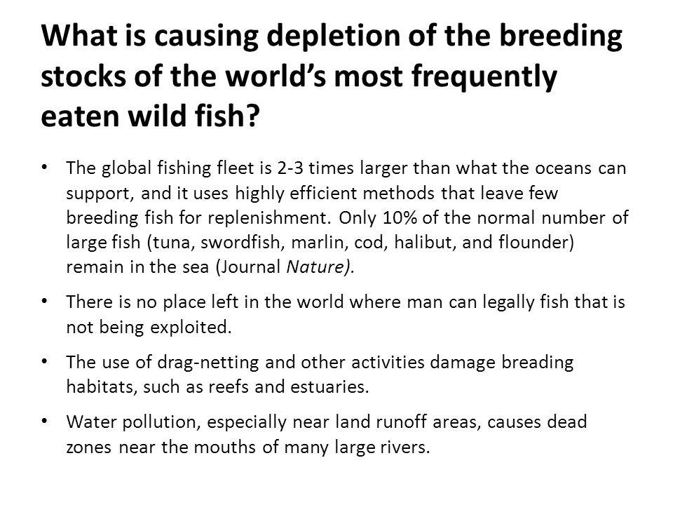 What is causing depletion of the breeding stocks of the worlds most frequently eaten wild fish? The global fishing fleet is 2-3 times larger than what