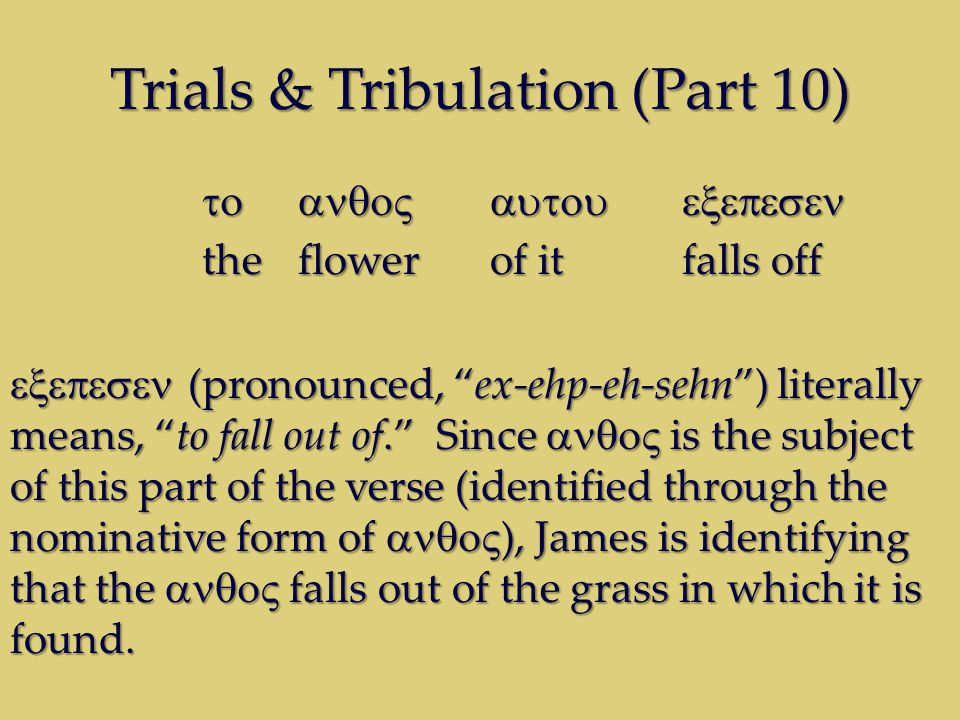 Trials & Tribulation (Part 10) theflowerof itfalls off (pronounced, ex-ehp-eh-sehn) literally means, to fall out of.