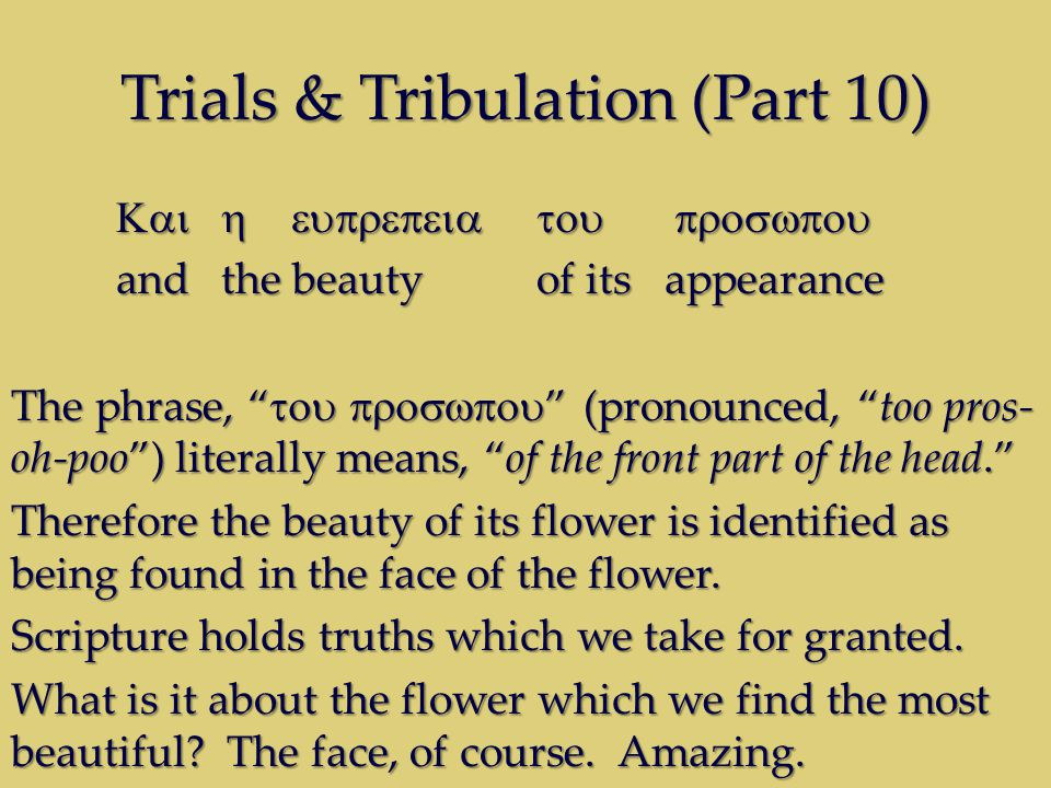 Trials & Tribulation (Part 10) andthe beauty of its appearance The phrase, (pronounced, too pros- oh-poo) literally means, of the front part of the head.