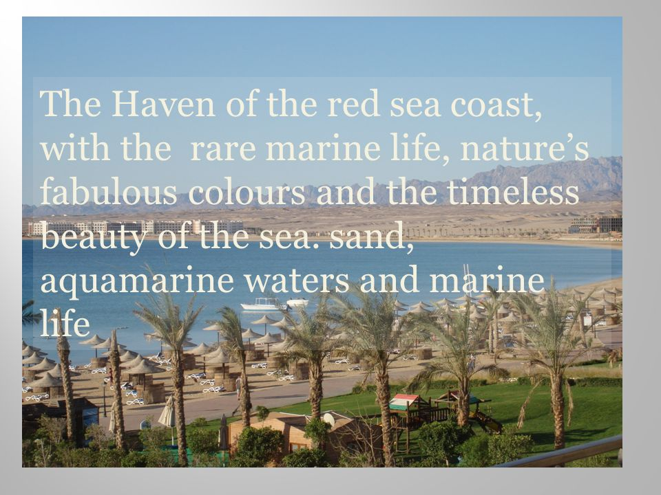The Haven of the red sea coast, with the rare marine life, natures fabulous colours and the timeless beauty of the sea.